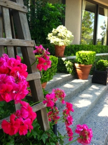 Geraniums in bright pink are put in strategic places such as the entry.