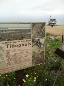 Malibu beach restoration.