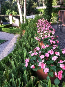I like to rotate various plants in front of our fountain. Here for the summer is an ivy geranium. A nice pop of color as you enter the courtyard.