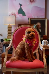 "Charles our mascot loves the ""Islands"" theme. We are a ""pet friendly"" showroom."
